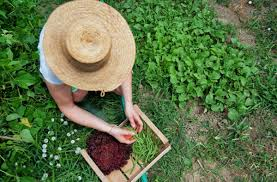 La mayoría de las mujeres que trabajan en el mundo rural no reciben una remuneración acorde a la legislación