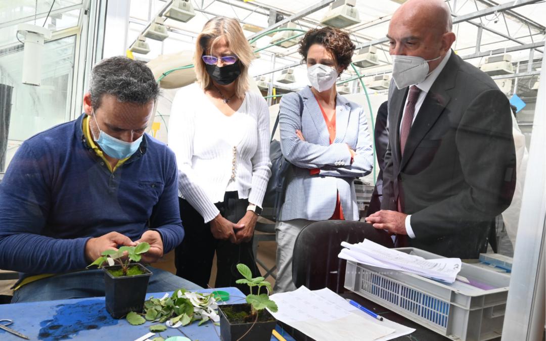 La Junta presenta el Plan Estratégico de Dinamización de la Investigación e Innovación Agraria y Agroalimentaria (2021-2027)