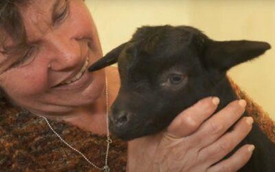El papel de la mujer en la ganadería