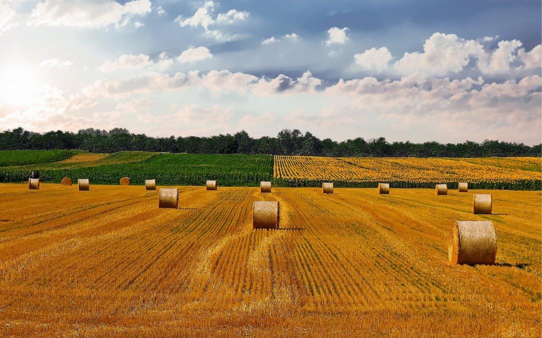 Ministerio y Consejería promueven programas para estancias en otras explotaciones agrarias